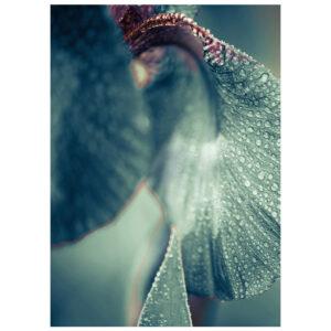 8-1573-037-9-SecretGarden-Morning-Dew-2.jpg